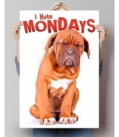 Poster I Hate Mondays I Hate Mondays, Winnie The Pooh, Funny, Disney Characters, Fictional Characters, Animation, Humor, Dogs, Poster