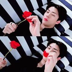 He loves me .he loves me not.aaa he loves me? Chanyeol, Exo Ot9, Kyungsoo, Kris Wu, 5 Years With Exo, Exo Album, Kim Minseok, Exo Korean, Xiu Min