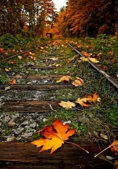 Beautiful but seeing tracks in this state maks me sad.  Overgrown and autumn painted, British Columbia, Canada