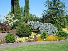 56 best conifers images on Pinterest | Backyard ideas, Garden ...