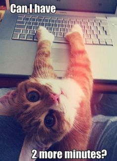 ❤Baby Love❤ ~funny pics with captions: cats. For more funny cat pics visit www.bestfunnyjokes4u.com/funny-cat-pics/ #Cats