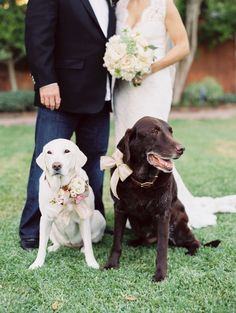 #Dogs dressed up for the Big Day.