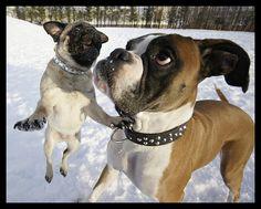 snow boxer
