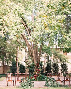 A Heartfelt, Intimate Wedding at a Historic Texan Home   Martha Stewart Weddings - After seeing pictures from a previous wedding that Wendy had planned, the couple knew they too wanted to get hitched under the property's huge oak tree in the backyard. Rather than building something in front of it and taking away from the tree's grandeur, their florist dressed it up with blooms in vibrant berry tones, resulting in an untouched, Secret Garden look.