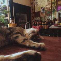 The Bag Of Nails, an awesome little pub in Bristol, has a special feature to help welcome patrons – 15 loveable cats that call the place home!