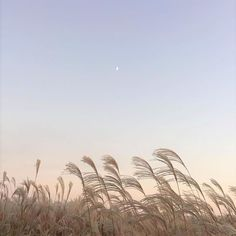 untitled awesome Tagged with aesthetic dawn indie sky soft Beige Aesthetic, Aesthetic Photo, Aesthetic Pictures, Korean Aesthetic, Photography Aesthetic, Summer Aesthetic, Aesthetic Vintage, Landscape Photography, Nature Photography