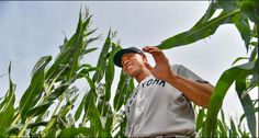 Aaron Judge, #99, comes out of the corn field before the MLB game in Dyersville, 2021. Mlb Games, Coming Out, Iowa, Going Out, Gender Reveal Parties