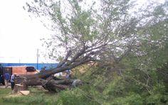 Tree removal http://www.leonstreeservice.biz/