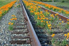 How beautiful to find a train track with flowers like these appearing. E.R.Bazor on Redbubble.com