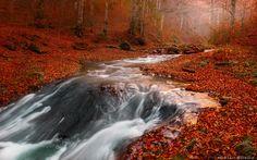 The Golden River / Adrian Borda