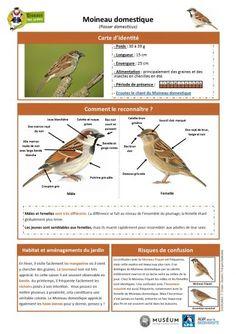 Outdoor Classroom, Baby Feeding, Birds, Green, Animals, Farmhouse Garden, Sparrows, Breastfeeding, Bird