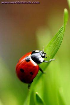 ladybug on blade of grass #HarpersBAZAAR #SpringStyle