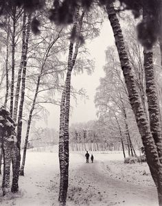 Carl Curman A walk in wintry woods Stockholm, Sweden, About Sweden, Sweden Travel, Ethereal, Woods, Country Roads, Europe, Shades, Black And White, Vacation