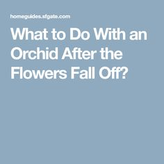 What to Do With an Orchid After the Flowers Fall Off?