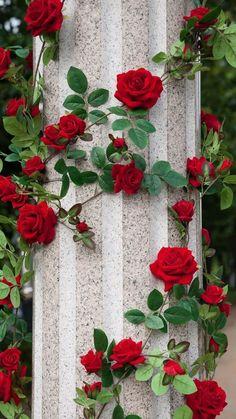 Joli rose filles sans manches Parti Robe Sequins Rose Âge 7 8 9 10 Bnwt