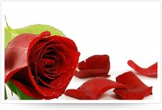 Muchos celebran el día de san valentino en grande comprando las cosas más caras para sus parejas mientras que el resto del año ni las pelas o les pegan. El 14 de febrero no es el único día de demos…