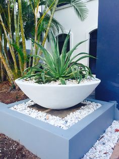 Large White Modern Planter - A statement in our Tropical Garden Makeover. I managed to relocate this big old prickly Agave into the huge pot. It looks amazing as you walk up to the front door. Modern Planters, Garden Planters, Outdoor Planters, Succulents Garden, Planter Pots, Outdoor Decor, Modern Landscaping, Backyard Landscaping, Backyard Designs