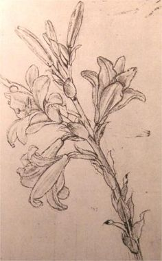 Leonardo da Vinci – Drawing of lilies, for an Annunciation - Also a study from about 1500 AD. These lilies were used as a study for Leonardo's Annunciation, since a lily is the central flower in the composition. Renaissance Kunst, High Renaissance, Tattoo Sketches, Drawing Sketches, Art Drawings, Botanical Art, Botanical Illustration, Leonardo Da Vinci Dibujos, Tattoos
