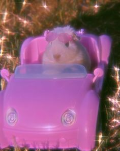Baby Animals Pictures, Cute Animal Photos, Funny Animal Pictures, Cute Rats, Cute Hamsters, Pink Tumblr Aesthetic, Pink Aesthetic, Pink Wallpaper Iphone, Aesthetic Iphone Wallpaper