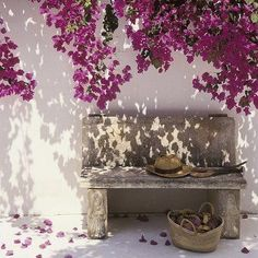Bougainvillea color, need to tie into the other side of the yard as well Bougainvillea, Dream Garden, Beautiful Gardens, Beautiful Flowers, Beautiful Places, Porches, Outdoor Spaces, Outdoor Living, Outdoor Gardens