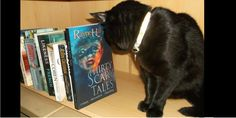 Sulu the #Cat wonders if he would enjoy reading this #book.