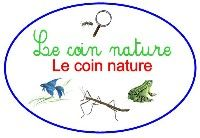Coin nature