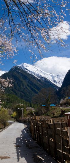 Springtime in Tibet.I want to go see this place one day.Please check out my website thanks. www.photopix.co.nz