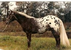 Trailer Trends – The Towing Guide Pretty Horses, Horse Love, Beautiful Horses, Animals Beautiful, Rare Horses, Horses And Dogs, Horse Pictures, Horse Photos, Appaloosa Horses