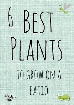 16 Plants That Are Easy to Grow on the Patio No garden? Easy plants to grow on a patio this summer t Patio Plants, Indoor Plants, House Plants, Patio Stone, Flagstone Patio, Concrete Patio, Outside Plants, Garden Deco, Easy Plants To Grow