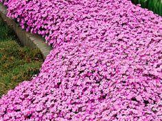 Backyard Landscaping, Perennials, Pergola, Succulents, Home And Garden, Landscape, Stone, Outdoor Decor, Flowers