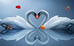 Amazing Swans live wallpaper - Android Apps on Google Play