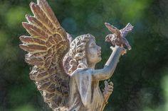 Angel by Pamela Williams