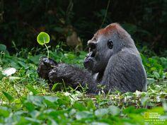National+Geographic+Wild+Animals | ... National Geographic best wildlife photos , National Geographic animals