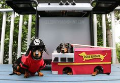 The Doxie Brigade Firefighter Costume!