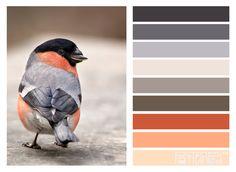 #patternpod #patternpodcolor #birds-pin it by carden