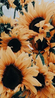 sunflower wallpaper 40 Sunflower Iphone Wallpaper That Cheers you Up - Page 23 of 42 - Sunflower Iphone Wallpaper, Iphone Wallpaper Yellow, Iphone Wallpaper Vsco, Flower Phone Wallpaper, Fall Wallpaper, Iphone Background Wallpaper, Wallpaper Quotes, Iphone Wallpapers, Fall Backgrounds Iphone