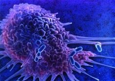Immune cells vs. invaders: it's a war going on in every healthy human body.
