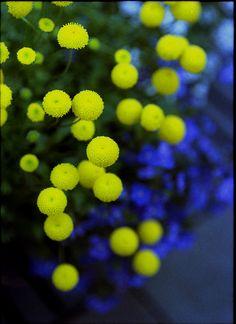 Yellow balls!!!!!!!!! Love 'em!
