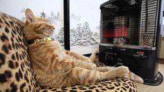 """wikitree   """"아 행복해"""" 따뜻함을 즐기는 고양이 사진 24선"""