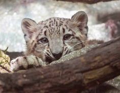Cute animals in pictures