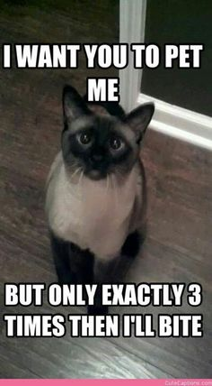 this is exactly my cat!