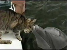 All I smell is fish but I don't think I can eat you therefore we shall be friends - Cat kisses Dolphin