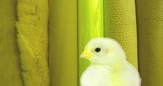 Tendances - L'été 2015 en perspective colorée - ©CUIR A PARIS Paris, Season Colors, Spring Summer 2015, Marketing Digital, Color Trends, Estate, Animals, Inspiration, Angel