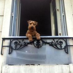 #Vincennes #Freddythedog #Animal #Dog #Instacool #Coolestdog