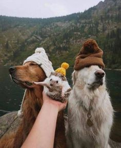 Funny animals have always been an internet sensation. They've got what it takes to make us laugh. Here are our collection of the most funny moments of cute dogs. Cute Little Animals, Cute Funny Animals, Funny Dogs, Hedgehog Pet, Cute Hedgehog, Cute Puppies, Cute Dogs, Dogs And Puppies, Doggies