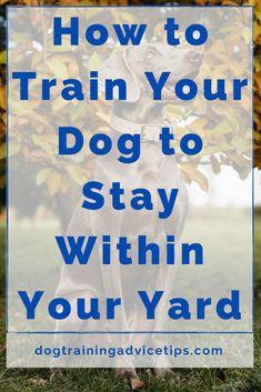 Training Your Puppy, Dog Training Tips, Collie, Dog Commands, Dog Games, Cat Dog, Dog Care Tips, Dog Behavior, Dog Life