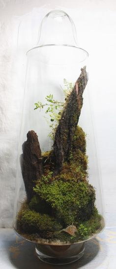 Below are the Beautiful Diy Concepts Terrariums. This article about Beautiful Diy Concepts Terrariums was posted under the Outdoor category by our team at March 2019 at pm. Hope you enjoy it and don't forget to share this . Moss Garden, Succulents Garden, Garden Plants, Indoor Plants, House Plants, Indoor Gardening, Terrarium Plants, Succulent Terrarium, Terrarium Ideas