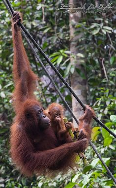 emanueledelbufalo.com the long-term traveler sarawak malaysia borneo