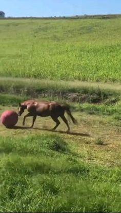 Animal Antics, Animal Memes, Cute Animal Videos, Funny Animal Pictures, Cute Little Animals, Cute Funny Animals, Beautiful Horses, Animals Beautiful, Funny Horses