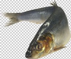 This PNG image was uploaded on September am by user: GameStopUS and is about Animals, Animal Source Foods, Bony Fish, Camera, Computer Icons. Computer Icon, Cooking Fish, How To Cook Fish, Colorful Fish, Fantasy Creatures, Fish Tank, Emoji, Tutorials, Icons